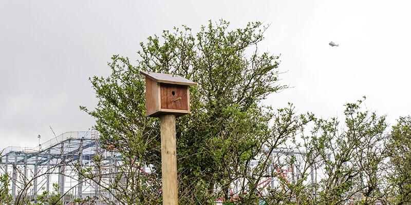 800x400_Birdhouse
